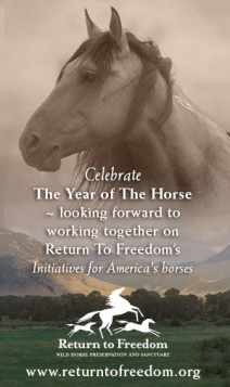 year-of-horse
